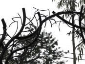 ティム・バートン風樹木のアーチ